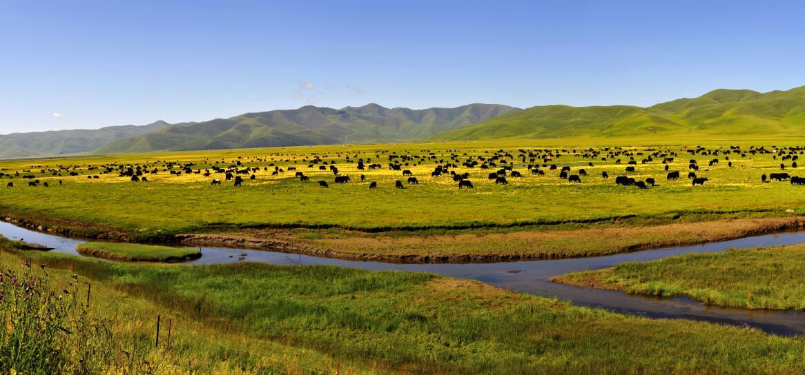 美丽的玛曲草原