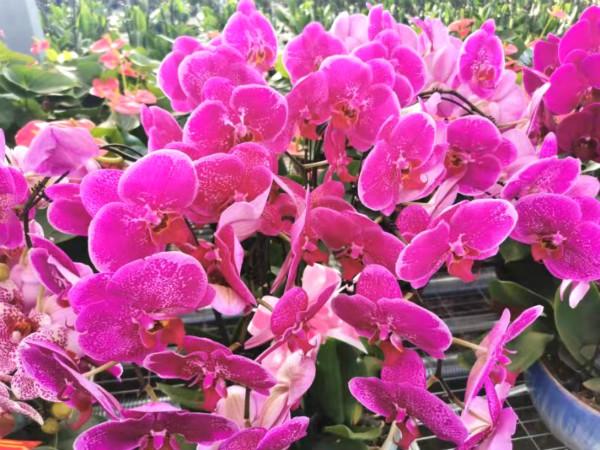 众手浇开幸福花:甘南州委办公室帮扶临潭卡勺卡村工作侧记