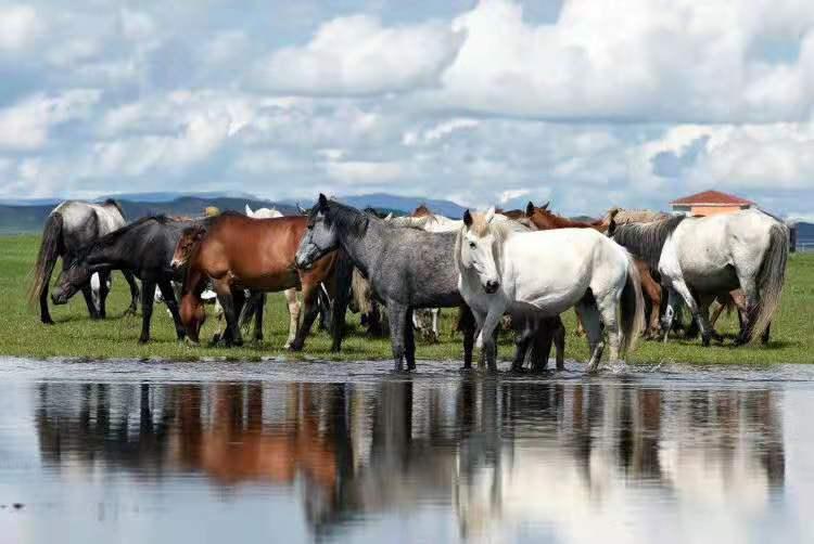 [溯源甘肃] 历史上的甘南及青藏东部畜牧业