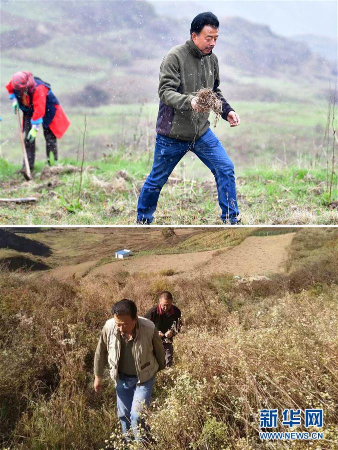 """(脱贫攻坚・图片故事)(6)扶贫相册――藏族村寨的脱贫""""贴心人"""""""